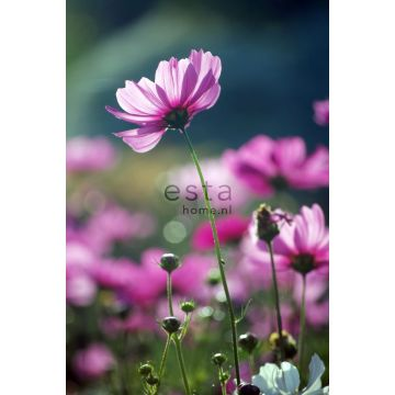 wall mural wildflowers pink from ESTA home