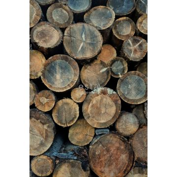 wall mural wood logs brown from ESTA home