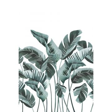 wall mural large banana leaves blue-green from ESTA home
