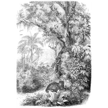 wall mural jungle black and white from ESTA home