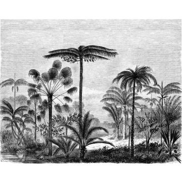 wall mural tropical landscape with palm trees black and white from ESTA home