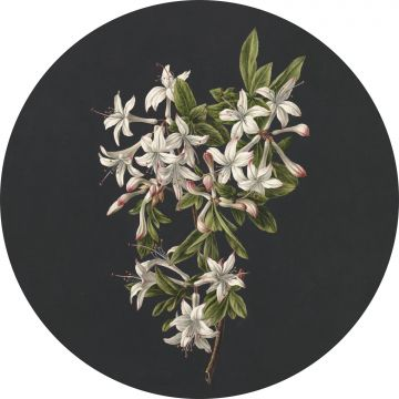 self-adhesive round wall mural blossom light pink and black from ESTA home