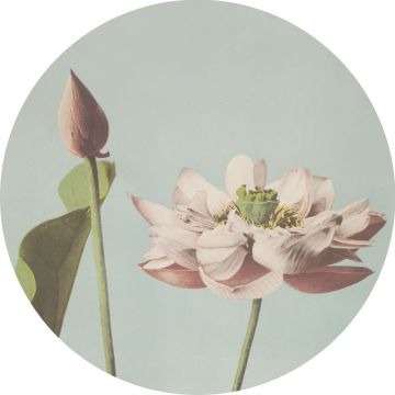 self-adhesive round wall mural lotus flower soft pink and grayed vintage blue from ESTA home