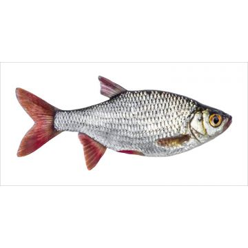 wall sticker Fish gray and red from ESTA home